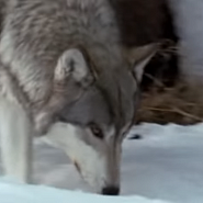 Lyube - Луна piano sheet music