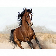 Lyube - Конь piano sheet music